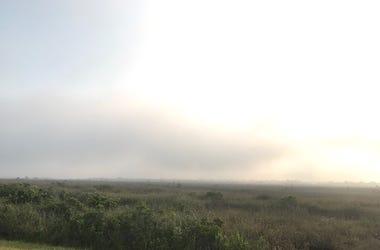 Fire In Everglades