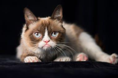 RIP To Grumy Cat
