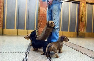 Dog and Elevator