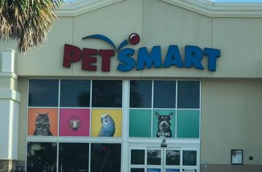Free Picture Of Pets With Santa At Petsmart