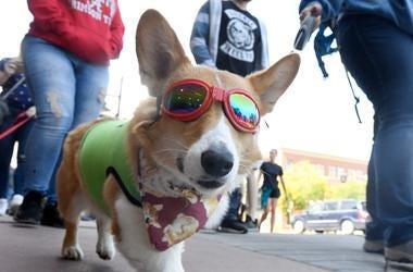 "Dog Dances To House Of Pain's ""Jump Around"""