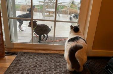 Rocky's Pets