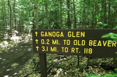 Rickett's Glen