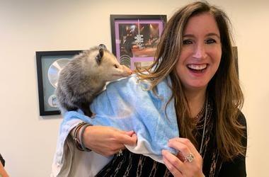 Gina Crash with Miss Possum from Irvine Nature Center
