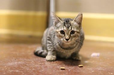 Almond the cat