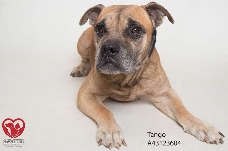 Tango the dog