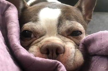 Mini the dog