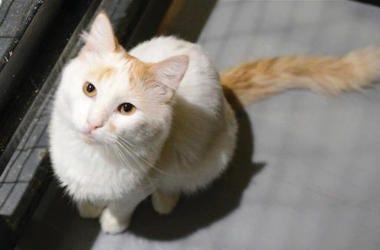 Haku the cat