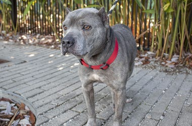 Watson the dog