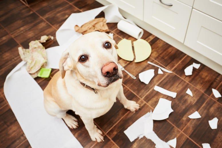 pets behaving badly matt and ramona