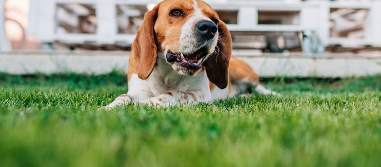 Why You Shouldn't Bury Your Pet In The Backyard | 107.9 ...