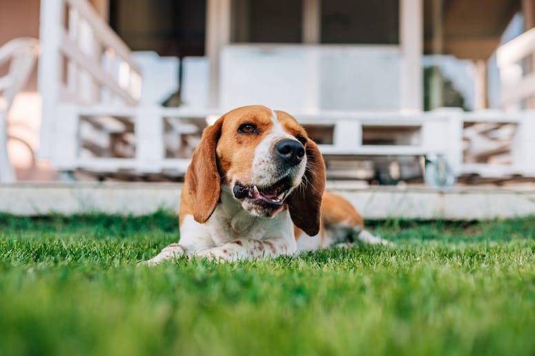 matt ramona podcast; don't bury pet in backyard