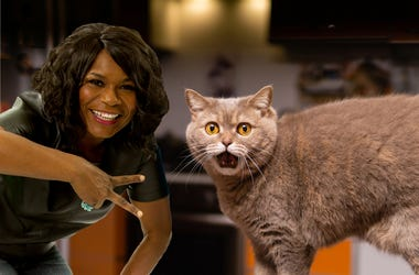 MeowTalk cat chat app
