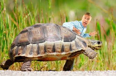 Matt saved a turtle