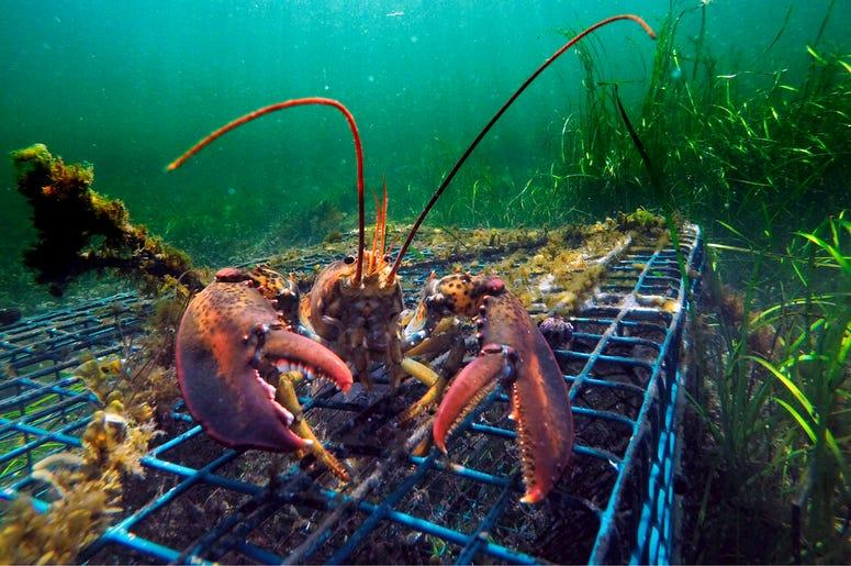 Lobster_Fishing