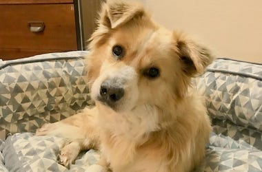 Cleveland APLs adoptable dog Buddy in his foster home