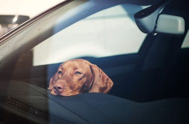 Sad dog left alone in locked car