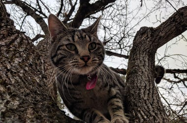 Our furry buddy Tree Cat in Spokane, Wash. We encountered him on every walk through town, and he tried to follow us home. Tree Cat