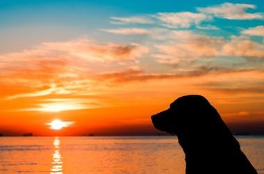 Dog and sunset