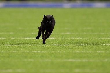 A black cat runs on the field during the second quarter of the New York Giants and Dallas Cowboys game at MetLife Stadium