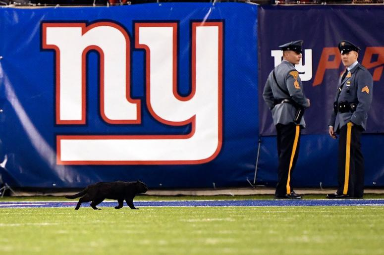 A black cat runs onto the field during the first half of Monday Night Football at MetLife Stadium. The New York Giants host the Dallas Cowboys in NFL Week 9 on Monday, Nov. 4, 2019, in East Rutherford. Nyg Vs Dal
