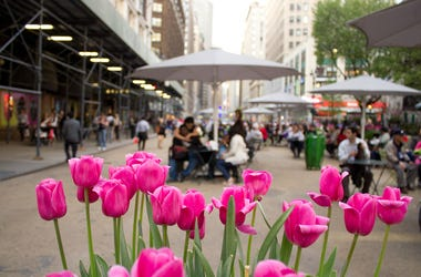 Spring in NYC