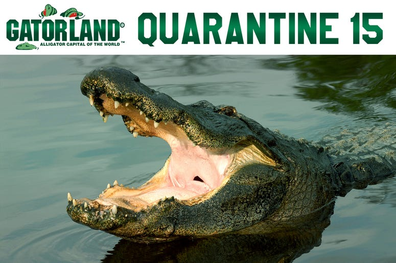 Gatorland Quarantine 15