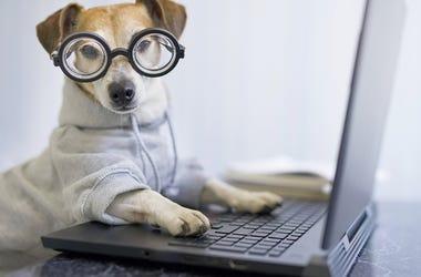 working like a dog?