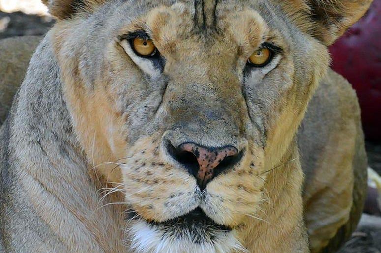 Central Florida Animal Reserve