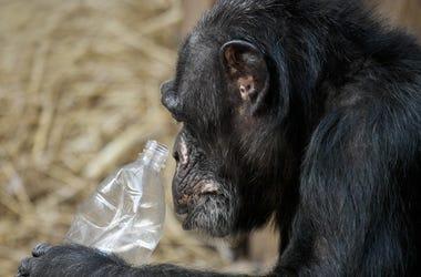 Zoo Plastic Bottle
