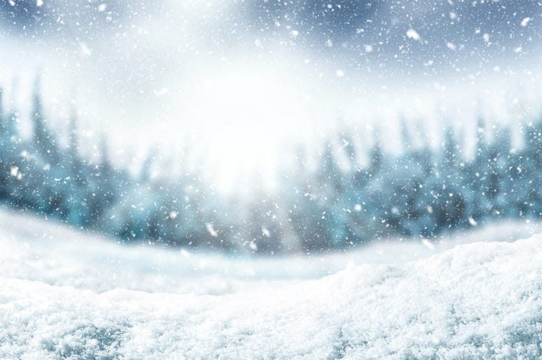 Snow background and tree. Winter backdrop with sunlight in morning time. - stock photo