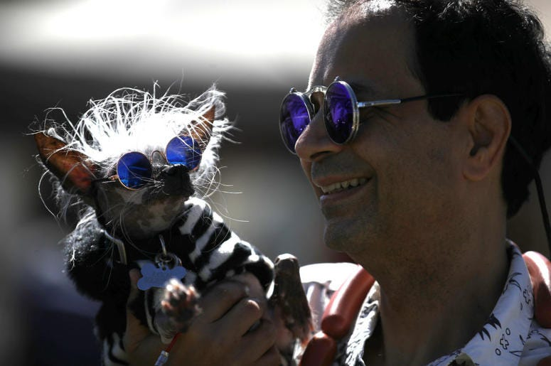 PETALUMA, CALIFORNIA - JUNE 21: Dan Andrew holds his dog Rascal before the start of the World's Ugliest Dog contest at the Marin-Sonoma County Fair on June 21, 2019 in Petaluma, California. Ugly dogs from across the country participate in the World's Ugli