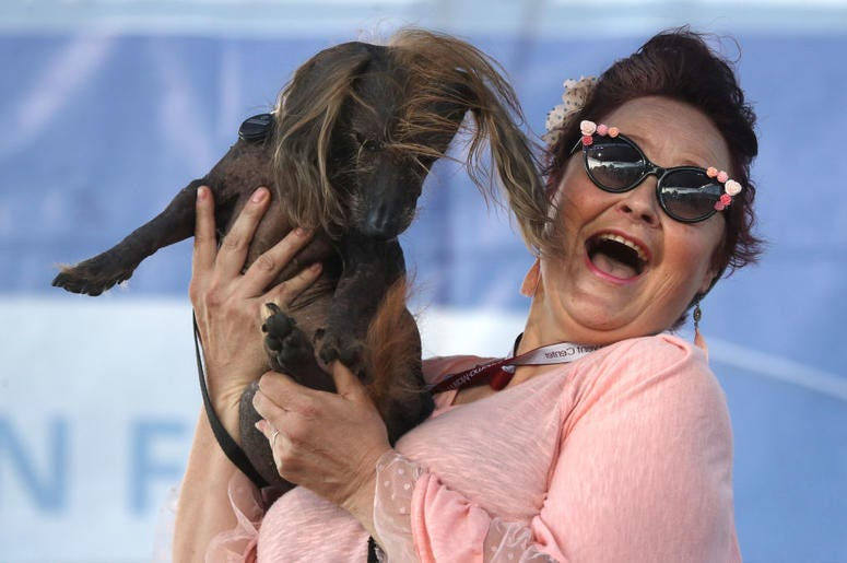 PETALUMA, CALIFORNIA - JUNE 21: Heather Wilson holds her dog Himisaboo during the World's Ugliest Dog contest at the Marin-Sonoma County Fair on June 21, 2019 in Petaluma, California. A dog named Scamp the Tramp from Santa Rosa, California won the annual