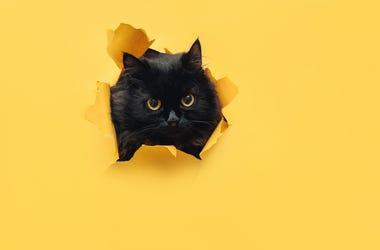 black cat yellow paper