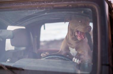 dog driving truck