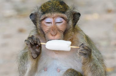 Monkey With Popsicle