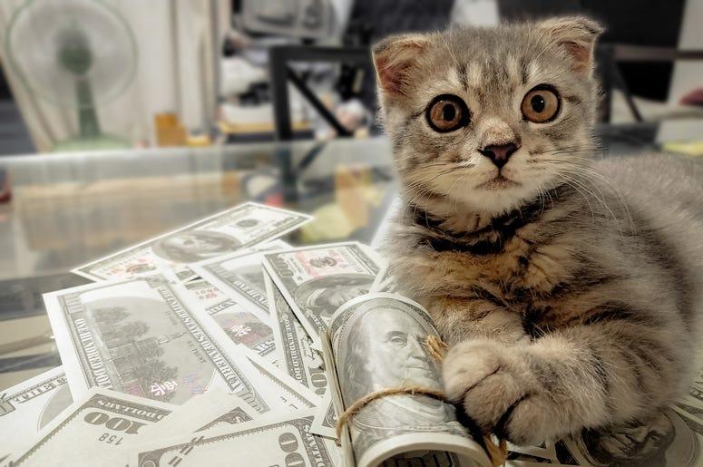 Kitten With Cash