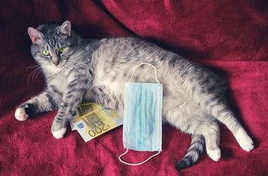 Cat Cash