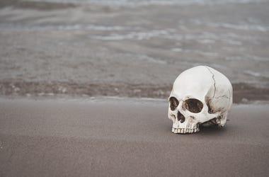 Skull on Beach