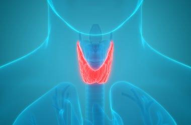 Throat XRAY