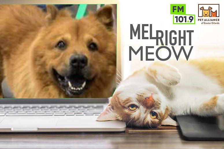 Happy @ Pet Alliance