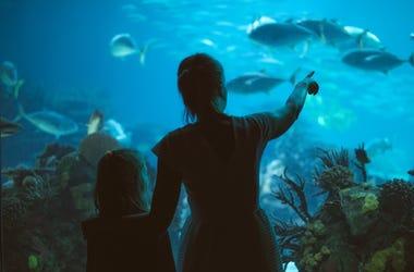 Woman And Girl Looking At Aquarium