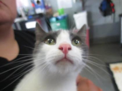 Miss Kitty @ Pet Alliance