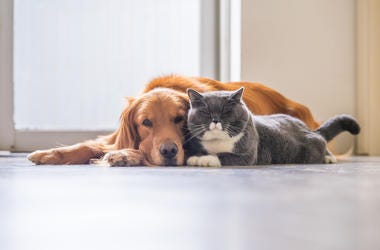 dog and cat on floor