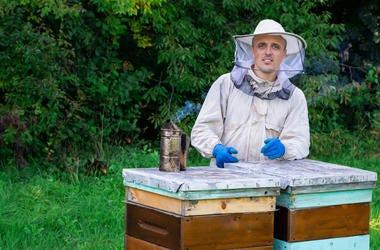 Man and Bees