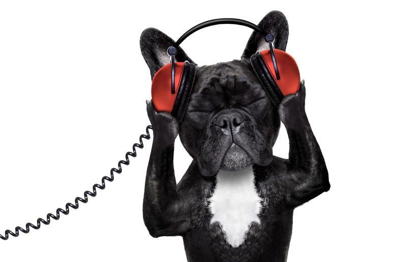 dog wearing headphones