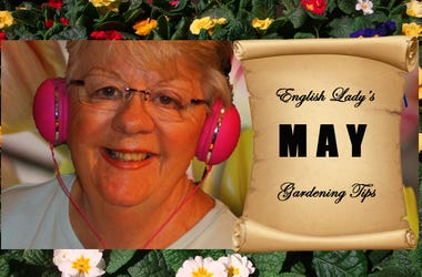 English Lady May Gardening Tips