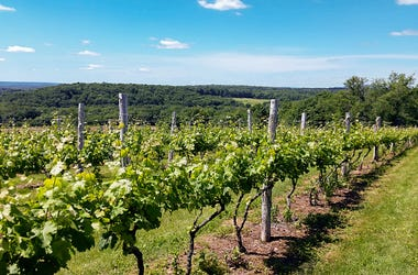 Connecticut Vineyard