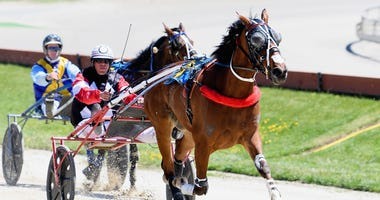 Harness racing in New Zealand in 2019