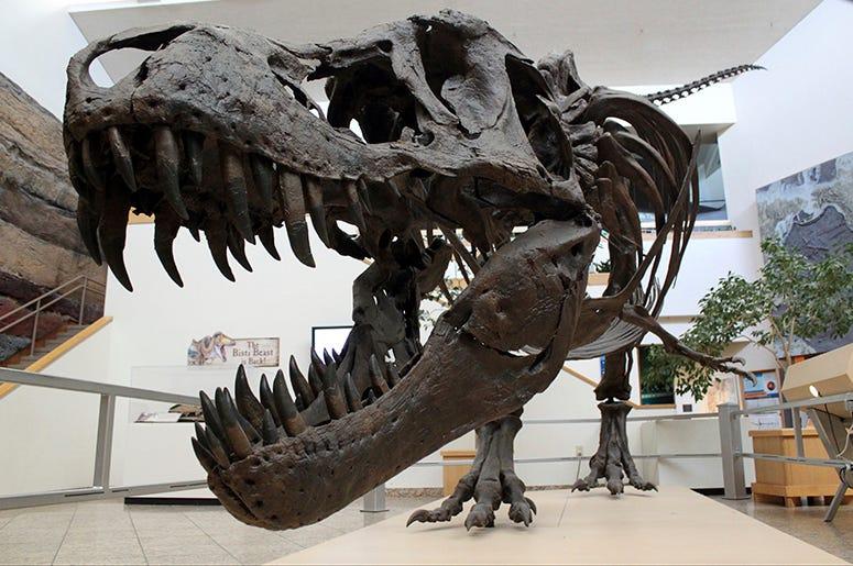 AP_Newsroom_Dinosaur_Doomsday_Extinction_Asteroid